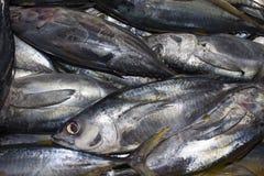 Pescados de atún muertos en el mercado imagen de archivo