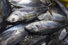 Pescados de atún muertos en el mercado fotografía de archivo libre de regalías