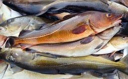 Pescados de bacalao imagen de archivo libre de regalías
