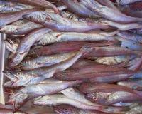 Pescados de bacalao frescos (bacala) para la venta Fotografía de archivo