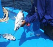 Pescados de cogida Foto de archivo libre de regalías