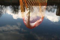 Pescados de cogida del lucio Foto de archivo
