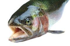 Pescados de color salmón foto de archivo