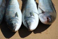 Pescados de color salmón Fotos de archivo