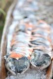 Pescados de color salmón imagenes de archivo