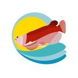 Pescados de color salmón Imagen de archivo