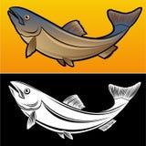 Pescados de color salmón Fotos de archivo libres de regalías