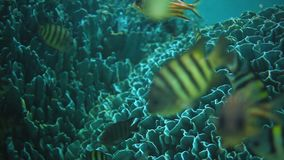 Pescados de Colourfull metrajes