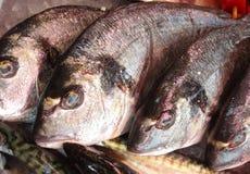 Pescados de Dorade fotografía de archivo libre de regalías