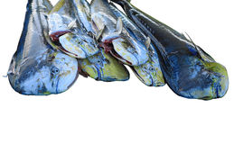 Pescados de Dorado Foto de archivo