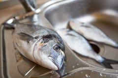 Pescados de Dorado en fregadero de cocina Foto de archivo libre de regalías