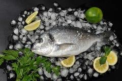 Pescados de Dorado que mienten en los cubos de hielo, la sal, la cal del perejil y el limón T fotos de archivo libres de regalías