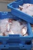 Pescados de Fres Fotografía de archivo libre de regalías