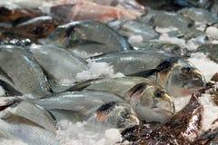 Pescados de Gilthead en contador Fotografía de archivo libre de regalías
