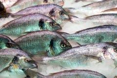 Pescados de Gilthead en contador del mercado Imagen de archivo