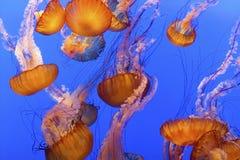 Pescados de jalea Imagenes de archivo