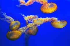 Pescados de jalea Imagen de archivo