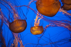 Pescados de jalea Fotos de archivo