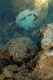 Pescados de jalea debajo del agua fotografía de archivo