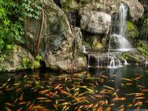 Pescados de Koi en la charca con una cascada Fotos de archivo libres de regalías