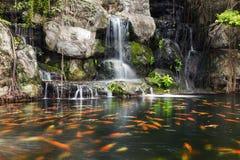 Pescados de Koi en la charca en el jardín con una cascada Imagen de archivo