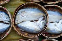 Pescados de la caballa Fotos de archivo libres de regalías