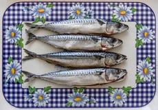 Pescados de la caballa imagen de archivo