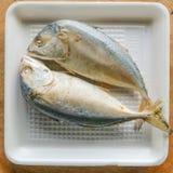 Pescados de la caballa Fotografía de archivo