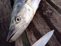 Pescados de la caballa Imagen de archivo libre de regalías