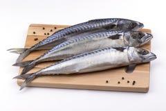 Pescados de la caballa en tabla de cortar fotografía de archivo libre de regalías