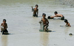 Pescados de la captura de los niños en campo de arroz Fotografía de archivo