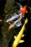 pescados de la charca foto de archivo libre de regalías