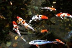 pescados de la charca Fotos de archivo