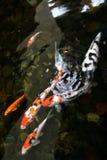 pescados de la charca imagen de archivo libre de regalías