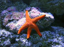 Pescados de la estrella Imagenes de archivo