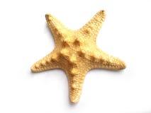 Pescados de la estrella Imagen de archivo