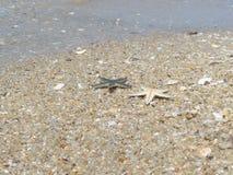 Pescados de la estrella en la playa bangsan Imágenes de archivo libres de regalías