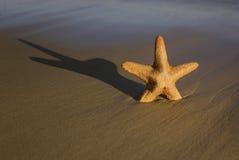 Pescados de la estrella en una playa Foto de archivo libre de regalías