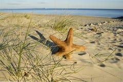 Pescados de la estrella en una playa Fotografía de archivo