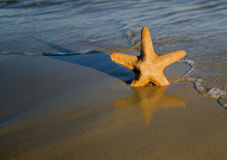Pescados de la estrella en una playa Fotos de archivo