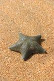 Pescados de la estrella I Imagen de archivo libre de regalías