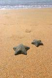Pescados de la estrella II Fotografía de archivo libre de regalías