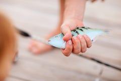 Pescados de la explotación agrícola del pescador Fotos de archivo libres de regalías