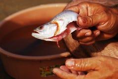 Pescados de la limpieza Foto de archivo
