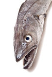 Pescados de la merluza Imagen de archivo