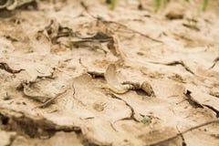 Pescados de la muerte en suelo seco Foto de archivo