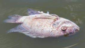 Pescados de la muerte y aguas residuales Imagen de archivo libre de regalías