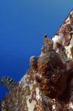 Pescados de la rana Fotografía de archivo