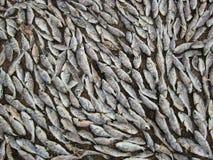 Pescados de la sal imagen de archivo libre de regalías