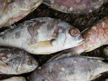 Pescados de la sal fotografía de archivo